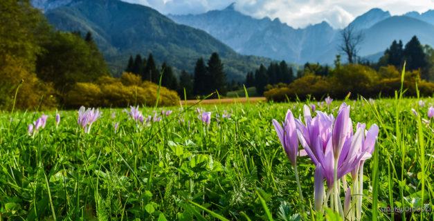 Alpy Julijskie, zimowity
