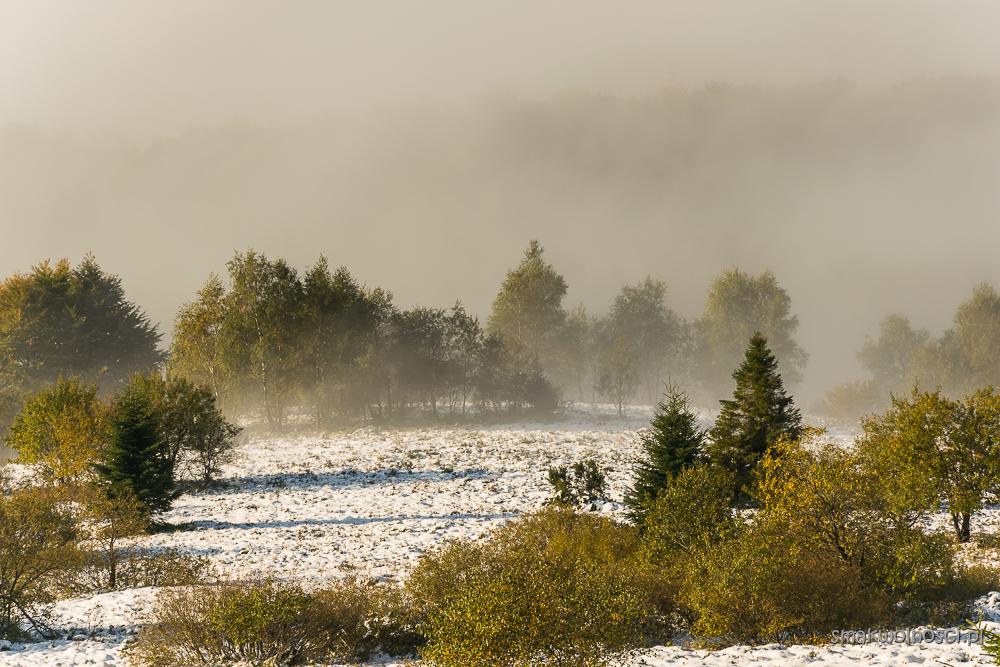 poranne mgły na Połoninie Caryńskiej
