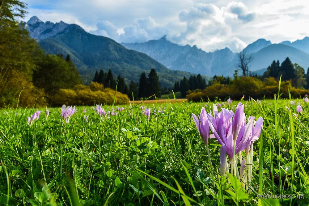 Słowenia, Alpy Julijskie, zimowity