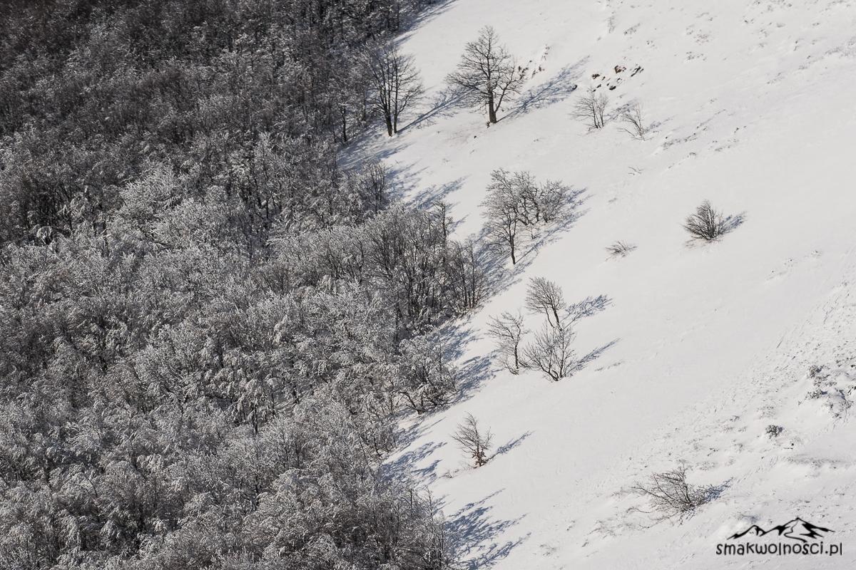 las w bieszczadach