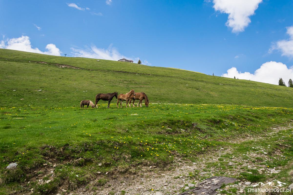 konie w górach