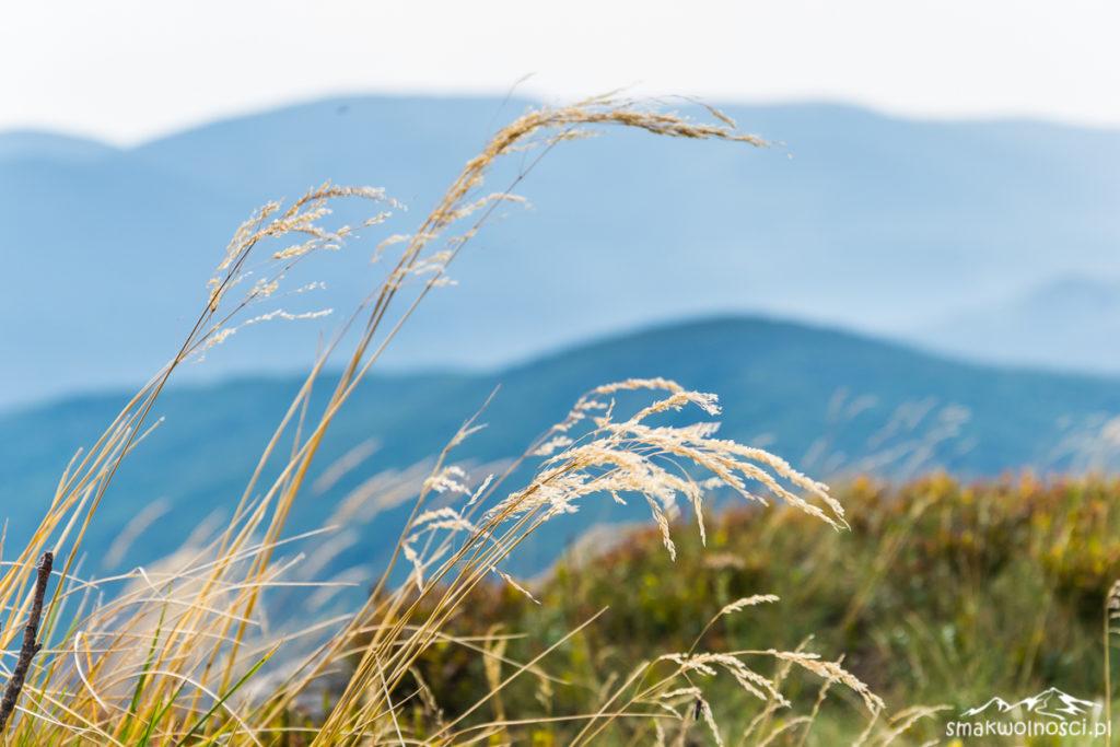 bieszczadzkie trawy