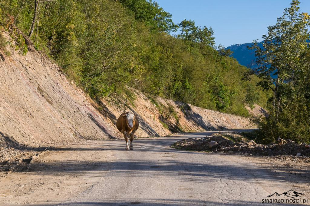 droga w Bośni